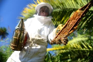 Miel 3_ Entre Rios_ apicultura_ Autor_ Roger_Cabral