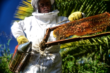 Miel 4_ Entre Rios_ apicultura_ Autor_ Roger_Cabral