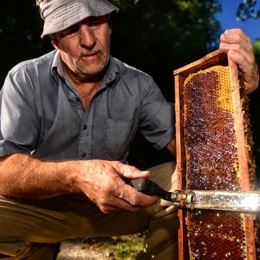 Miel 7_ Entre Rios_ apicultura_ Autor_ Roger_Cabral