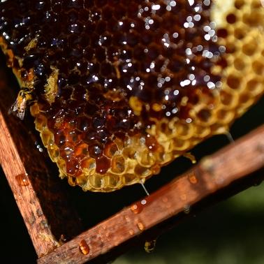 Miel 8_ Entre Rios_ apicultura_ Autor_ Roger_Cabral