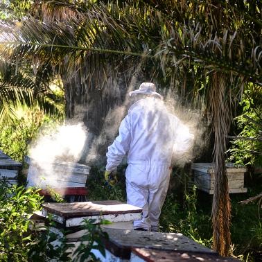 Miel 9_ Entre Rios_ apicultura_ Autor_ Roger_Cabral