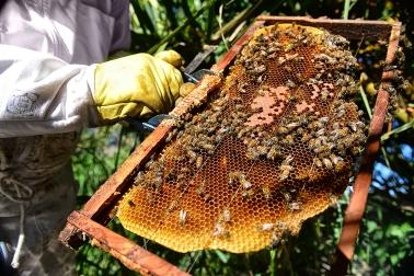 Miel5_ Entre Rios_ apicultura_ Autor_ Roger_Cabral