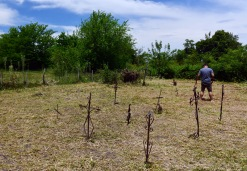 Ingeniero Sajaroff -Cementerio de los negros - Foto: Roger Cabral